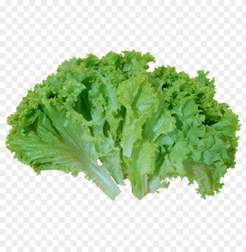 Download Green Salad Lettuce Png Images Background Toppng