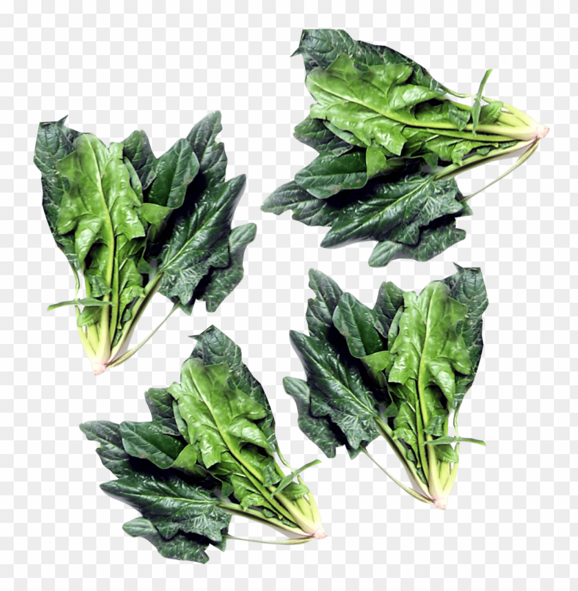 free PNG Download green spinach png images background PNG images transparent