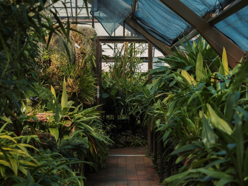 free PNG greenhouse, plants, green, tropical, exotic background PNG images transparent
