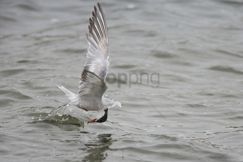 gull, hunting, mining wallpaper background best stock photos@toppng.com