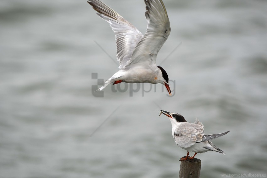free PNG gull, mining, poultry wallpaper background best stock photos PNG images transparent