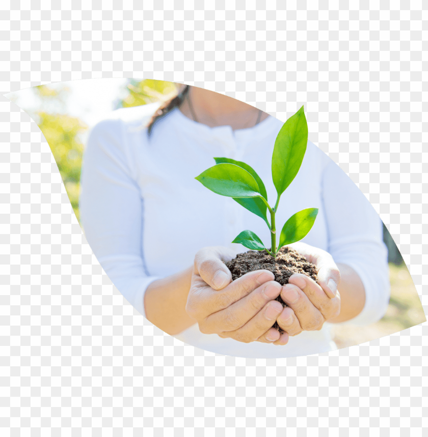 free PNG hand PNG image with transparent background PNG images transparent