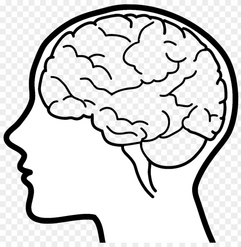free PNG hand drawn brain png images - your brain and you: what neuroscience means PNG image with transparent background PNG images transparent