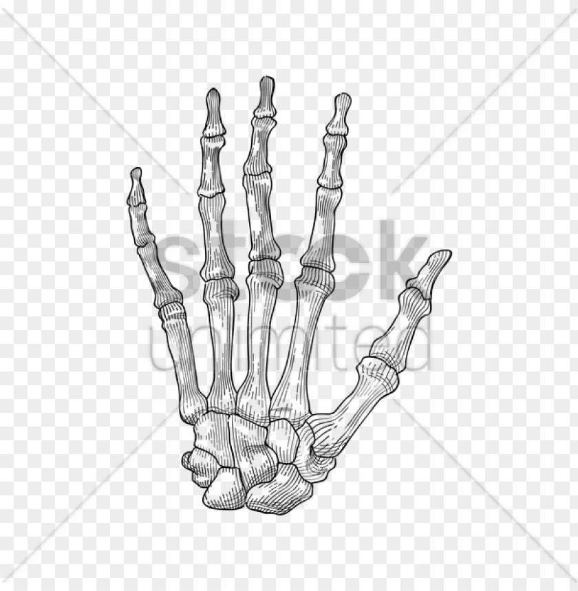 free PNG hand holding hand skeleton PNG image with transparent background PNG images transparent