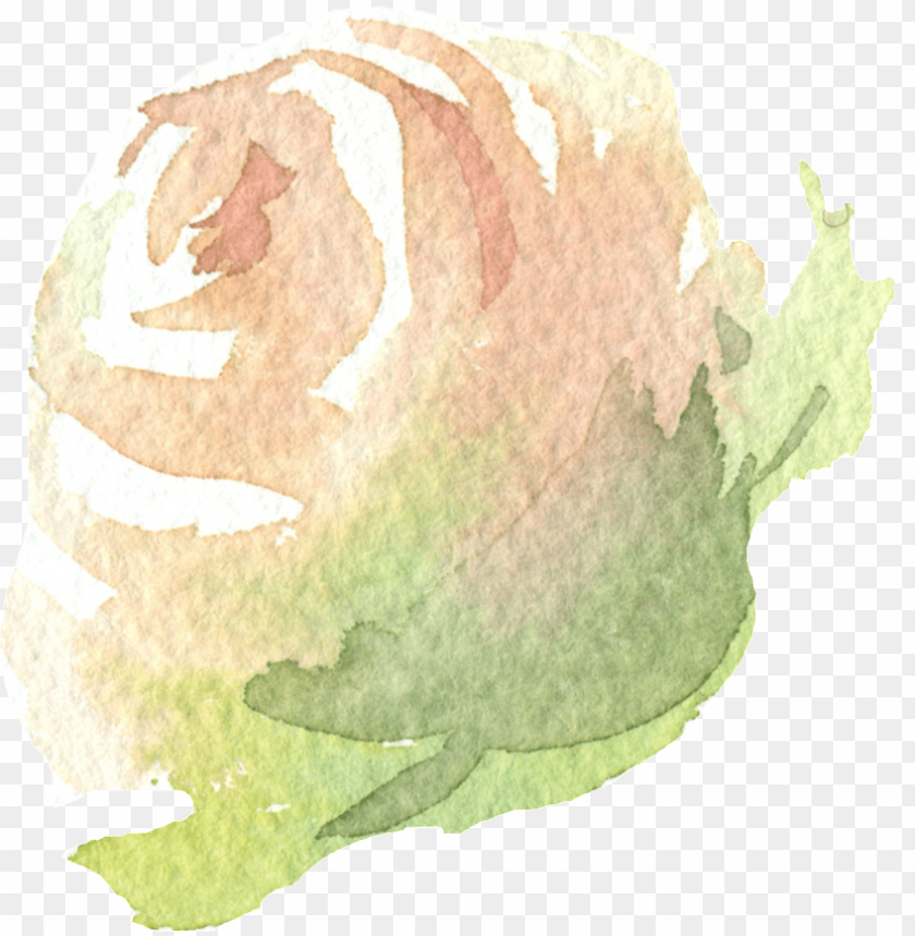 free PNG hand painted a champagne rose png transparent - portable network graphics PNG image with transparent background PNG images transparent