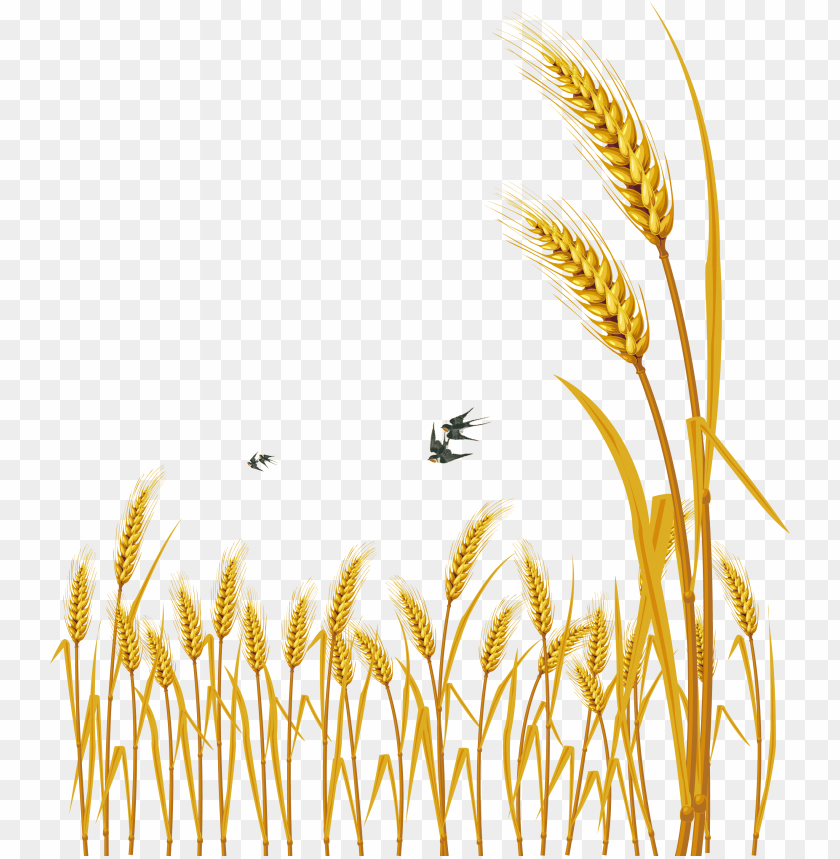 free PNG hand painted cartoon delicate wheat decorative - free vector wheat PNG image with transparent background PNG images transparent