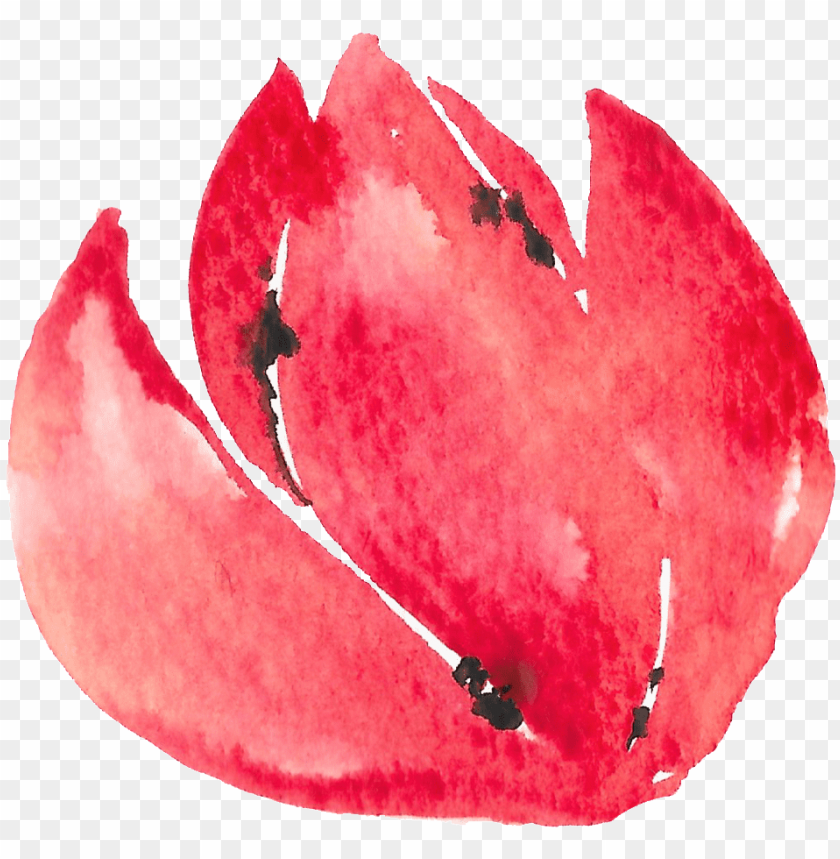 free PNG hand painted half open flower watercolor transparent - visual arts PNG image with transparent background PNG images transparent
