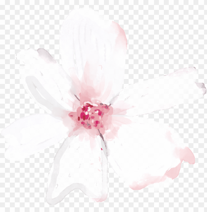 free PNG hand painted translucent floral png transparent - portable network graphics PNG image with transparent background PNG images transparent