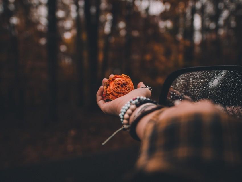 free PNG hand, rose, blur, flower, bokeh, glare background PNG images transparent