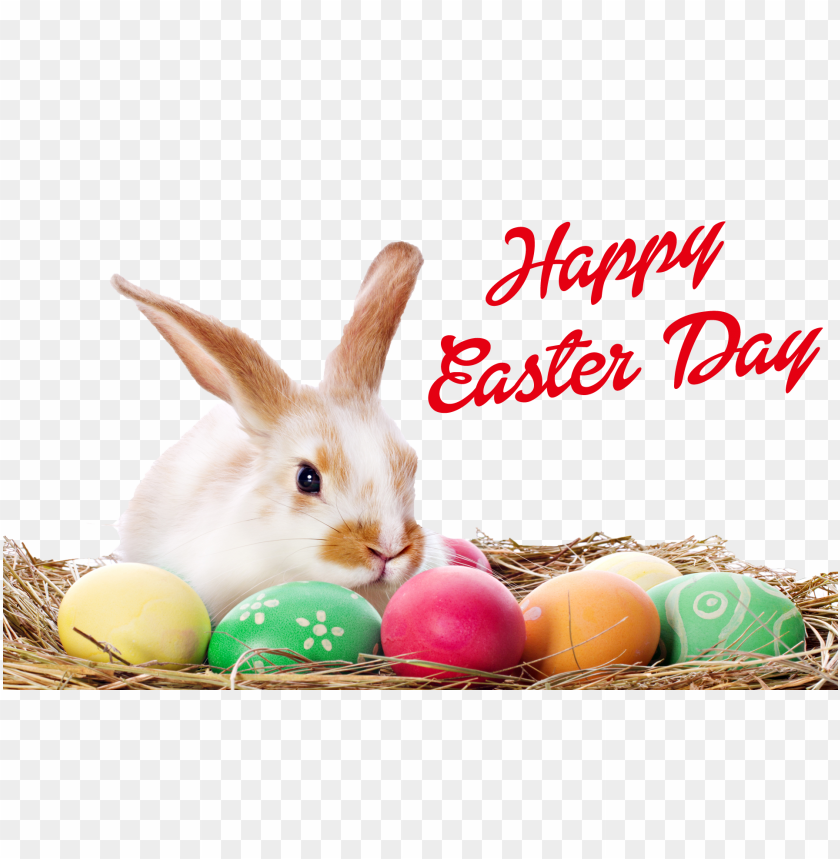 free PNG happy easter bunny png - happy easter egg PNG image with transparent background PNG images transparent