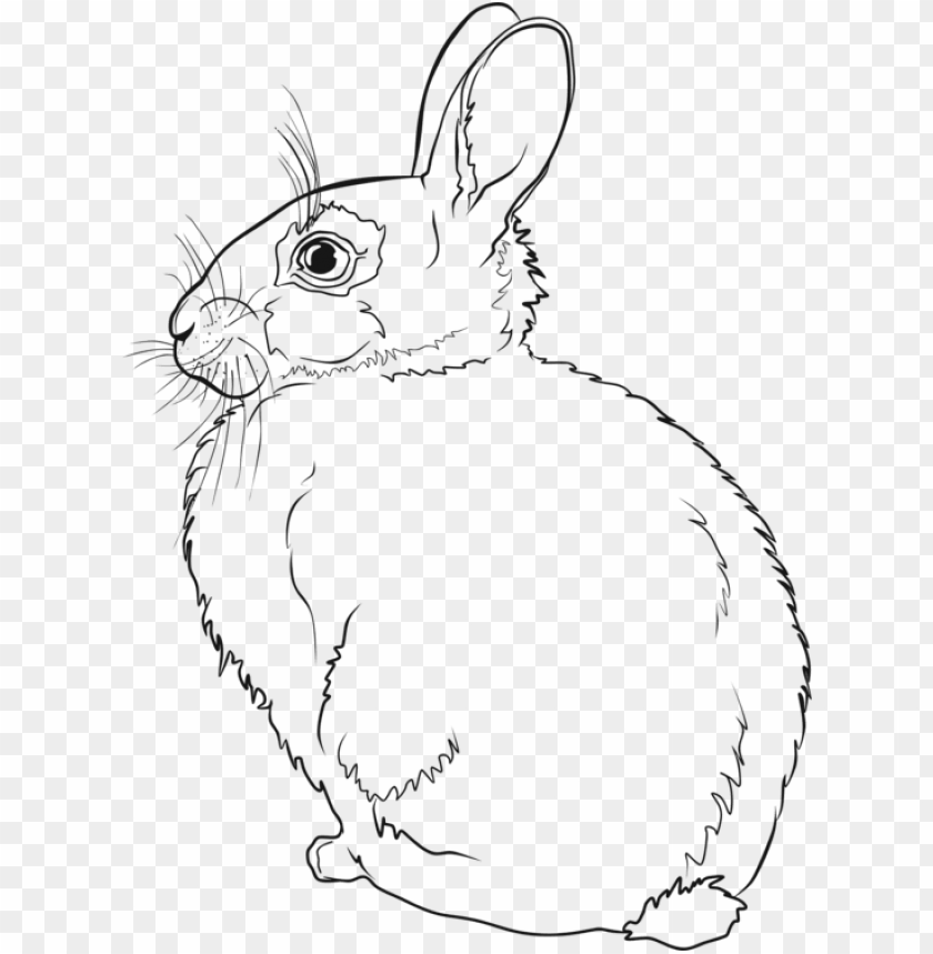 free PNG hare easter bunny rabbit line art drawing - rabbit line art PNG image with transparent background PNG images transparent
