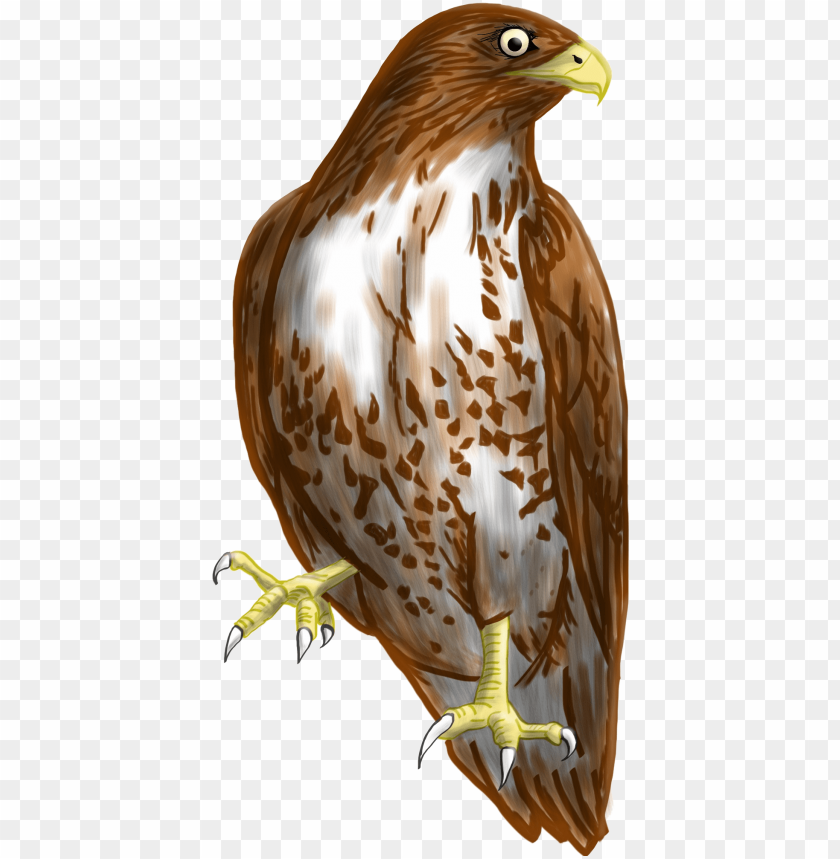 free PNG hawk clipart transparent background - transparent background hawk clipart PNG image with transparent background PNG images transparent