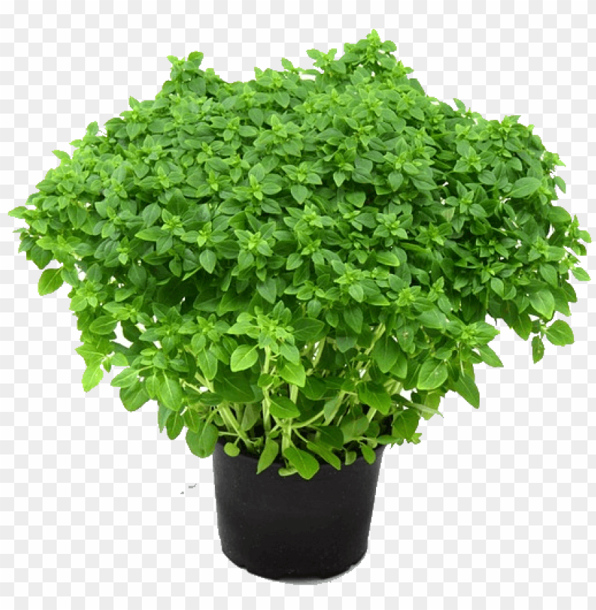 free PNG Download herb free png images background PNG images transparent