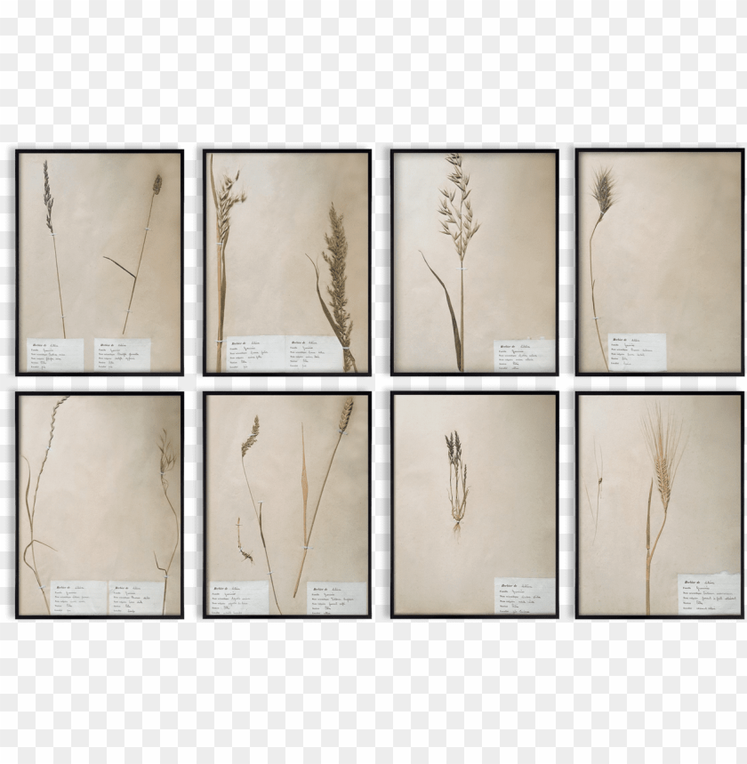 Herbaria Framed Vintage Black Frame Wall Decoration Plywood Png Image With Transparent Background Toppng,American Airlines Baggage Allowance Premium Economy