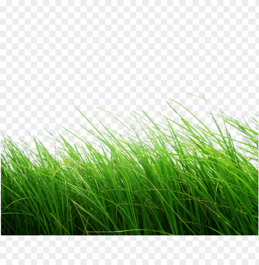 free PNG Download high grass png images background PNG images transparent