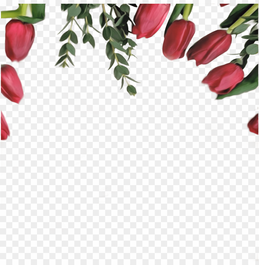 free PNG high resolution border free PNG image with transparent background PNG images transparent