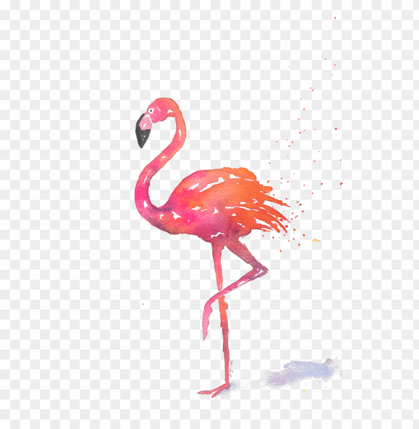free PNG home>note cards>summer theme note cards - greater flamingo PNG image with transparent background PNG images transparent