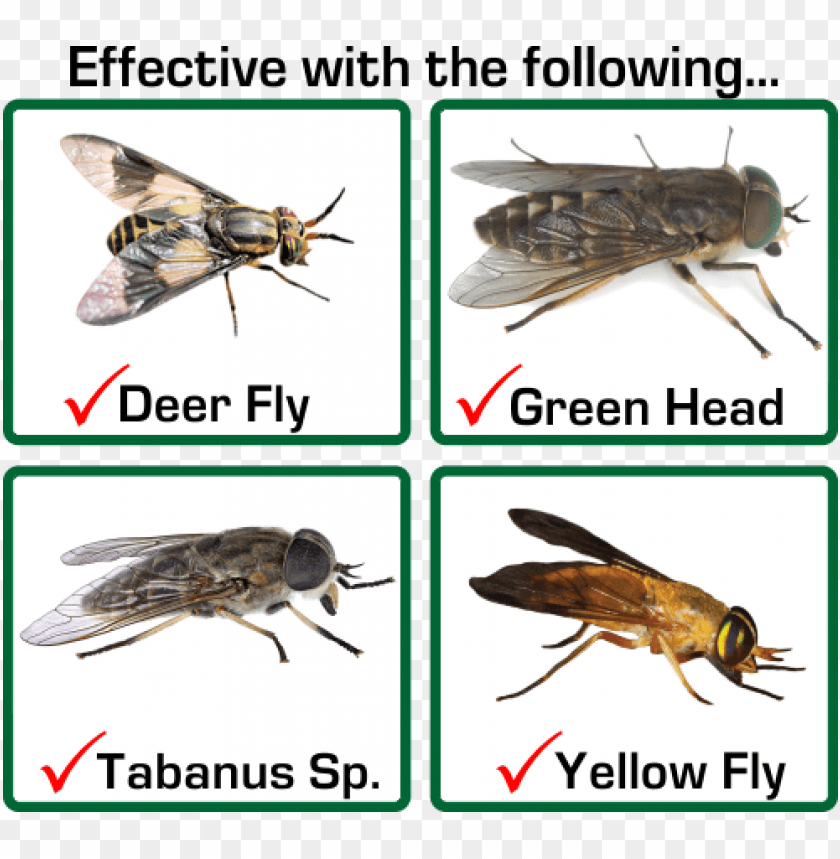 free PNG horse fly vs deer fly PNG image with transparent background PNG images transparent