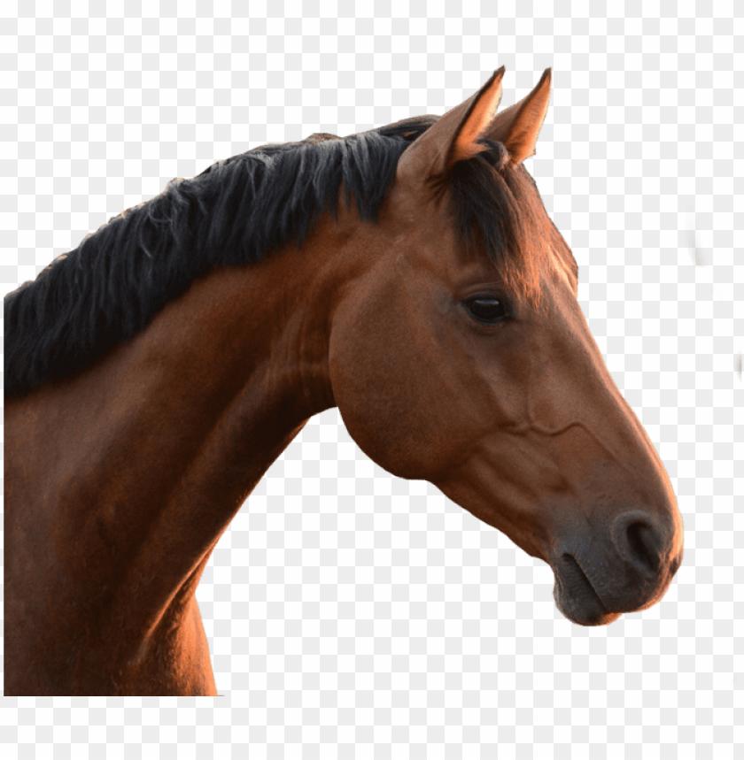 free PNG horse head png - horse head no background PNG image with transparent background PNG images transparent