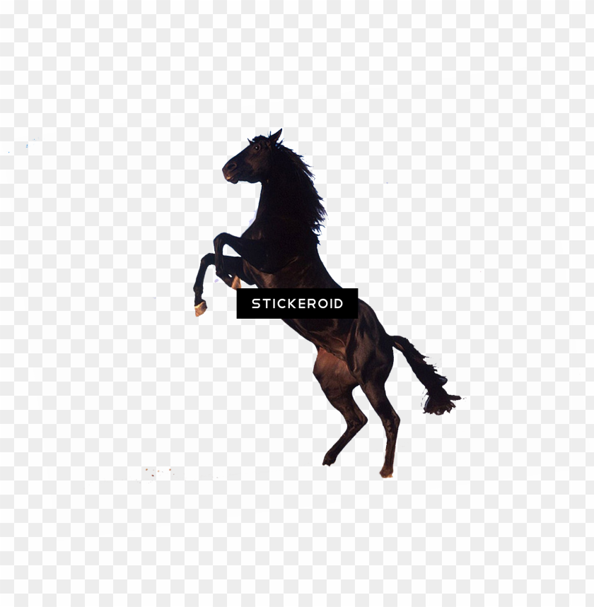 horse - standing horse clip art PNG image with transparent background@toppng.com