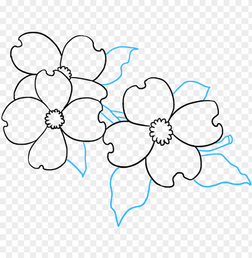 free PNG how to draw dogwood flowers - flower PNG image with transparent background PNG images transparent