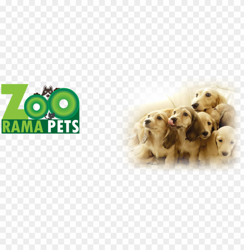 free PNG http - //wp - zooramapets - com/wp soo cute 3 dogs - rosmax interactive dog toy - best iq treat dispensi PNG image with transparent background PNG images transparent