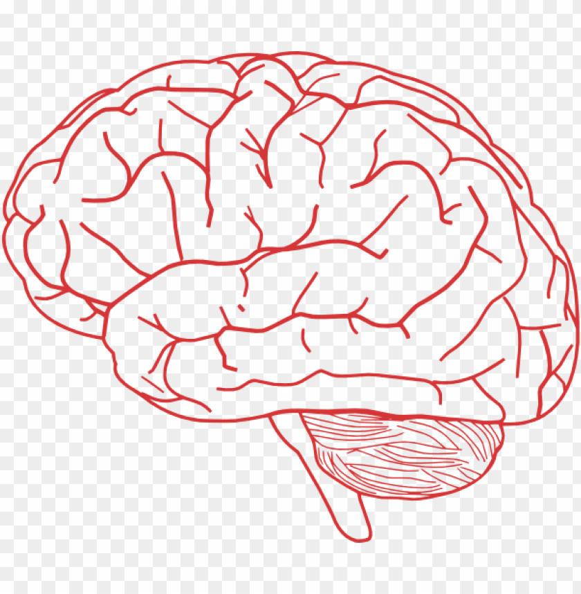 free PNG human brain clipart - brain clipart transparent PNG image with transparent background PNG images transparent