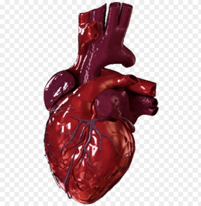 free PNG human heart png - bloody human heart PNG image with transparent background PNG images transparent