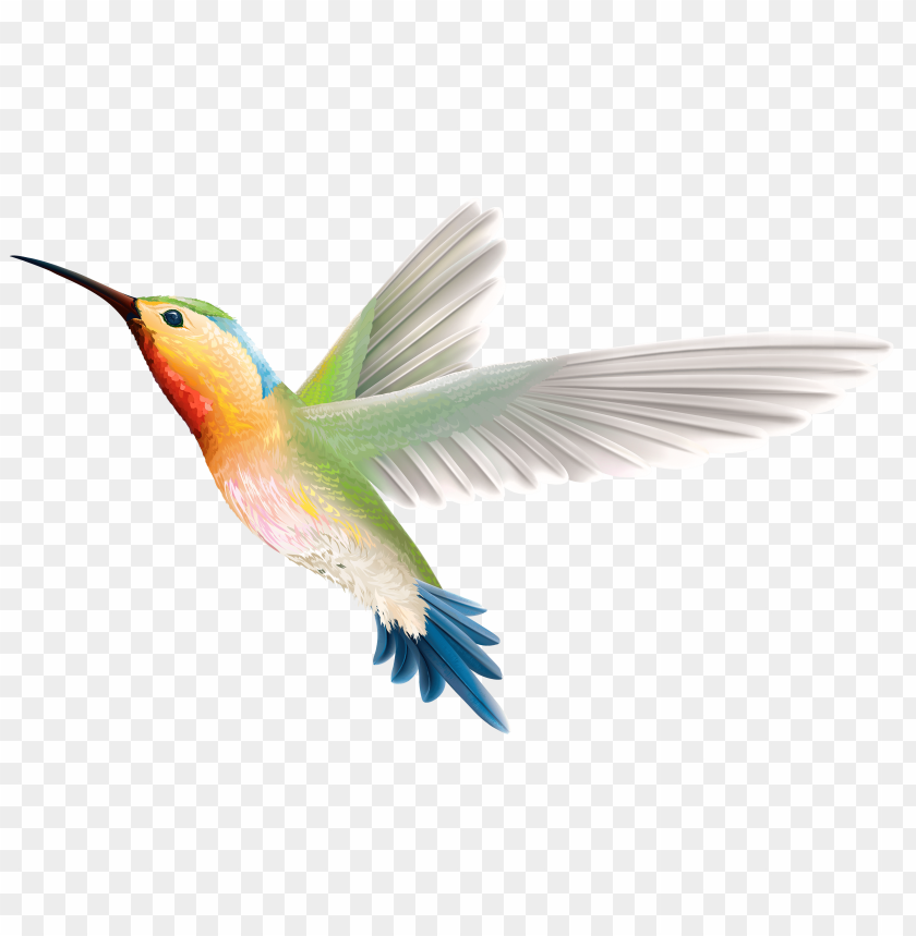 free PNG Download hummingbird clipart png photo   PNG images transparent
