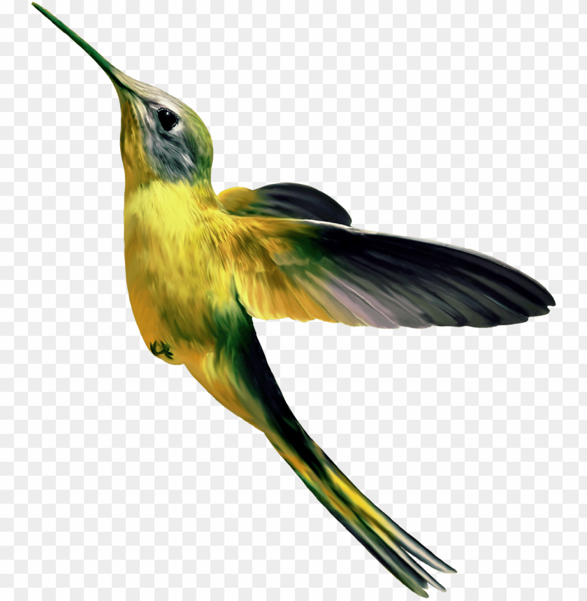 free PNG Download hummingbird png images background PNG images transparent