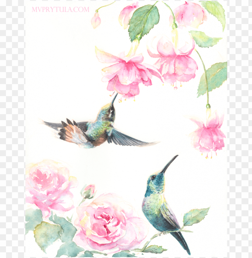 free PNG hummingbirds limited edition - ruby-throated hummingbird PNG image with transparent background PNG images transparent