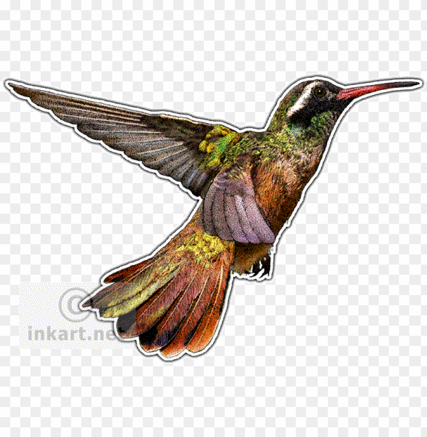 free PNG hummingbirds of north america mug PNG image with transparent background PNG images transparent
