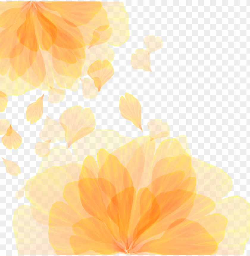 free PNG icture library library computer wallpaper orange flower PNG image with transparent background PNG images transparent