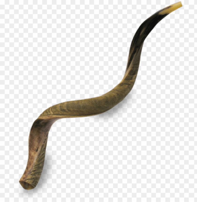 free PNG icture of great kudu shofar - extra large yemenite shofar - half polished half natural PNG image with transparent background PNG images transparent