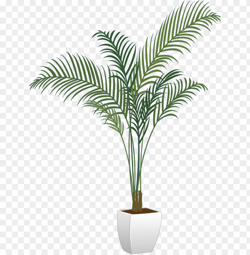 free PNG ictures of potted plants new arecaceae flowerpot houseplant - transparent potted plants PNG image with transparent background PNG images transparent
