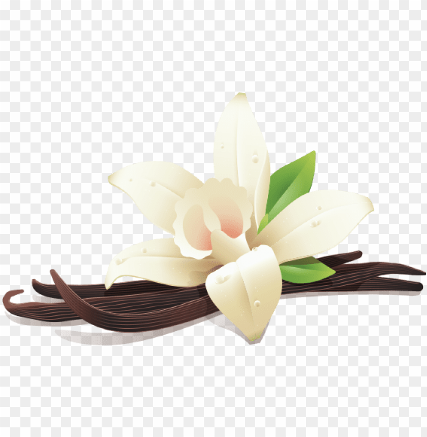 free PNG illustration of vanilla flower and three vanilla beans - vanilla PNG image with transparent background PNG images transparent
