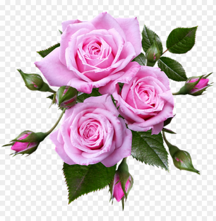 free PNG image result for musical notes pink roses transparent - pink roses transparent background PNG image with transparent background PNG images transparent