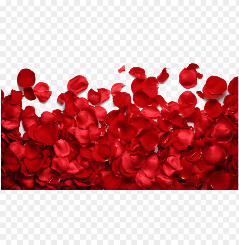 free PNG imges free download - roses petals png transparent PNG image with transparent background PNG images transparent