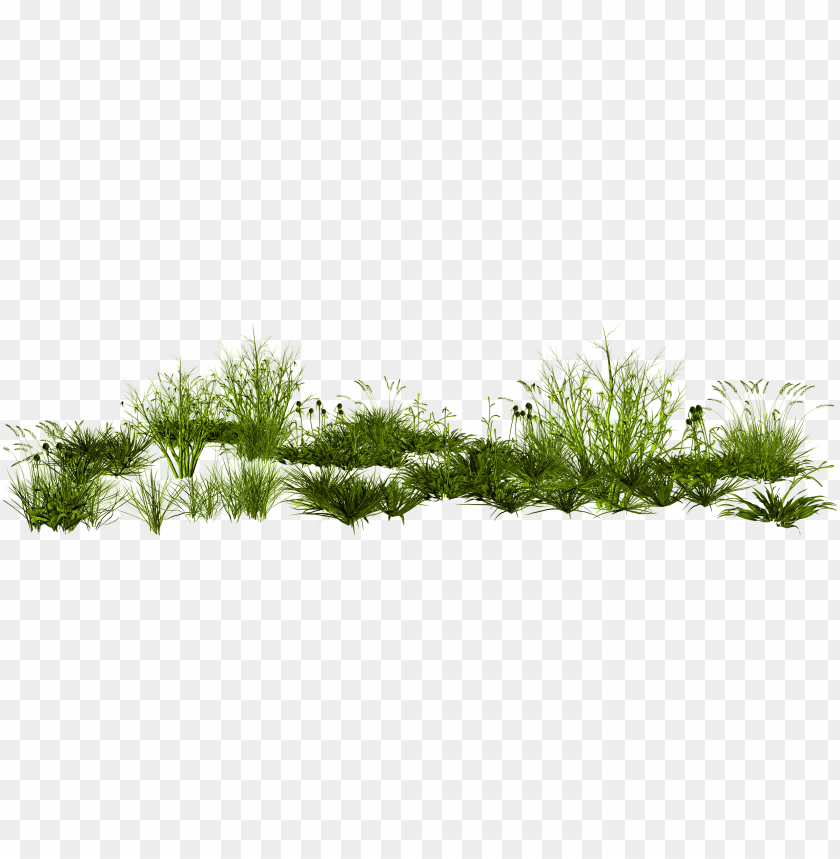 free PNG imp rendering photoscape creative green grass png - transparent tall grass PNG image with transparent background PNG images transparent