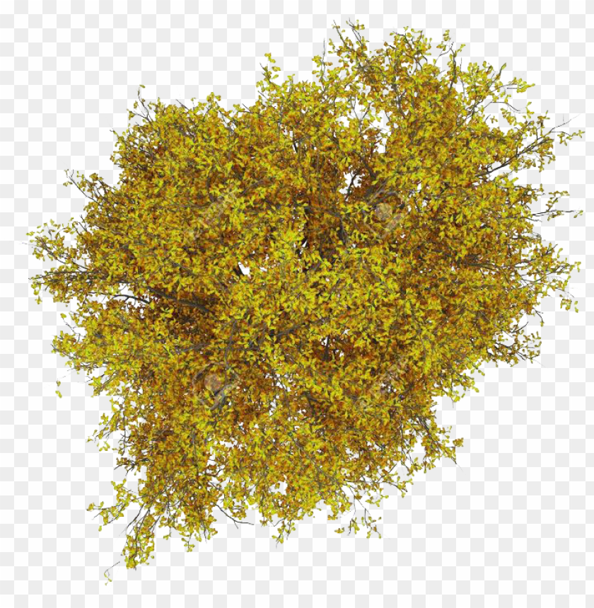 free PNG in by on la materials pinterest photoshop - yellow tree plan PNG image with transparent background PNG images transparent