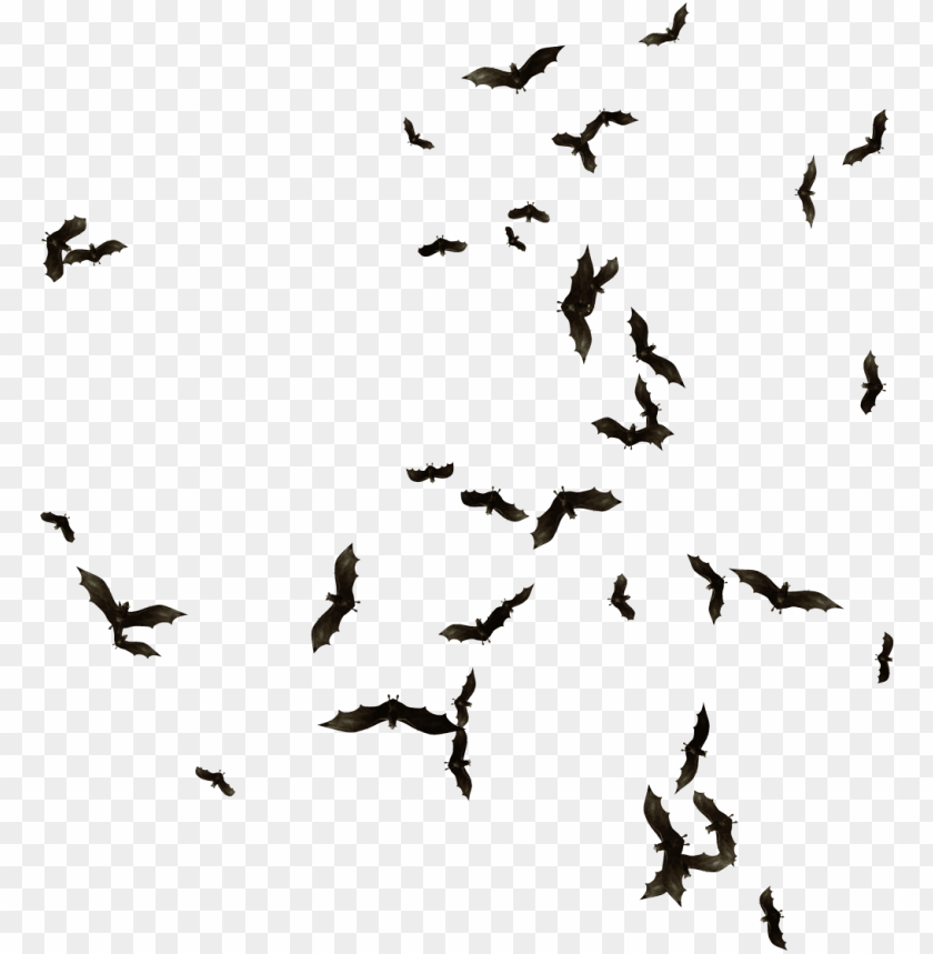 free PNG index of mapping objects clipart transparent library - swarm of bats PNG image with transparent background PNG images transparent
