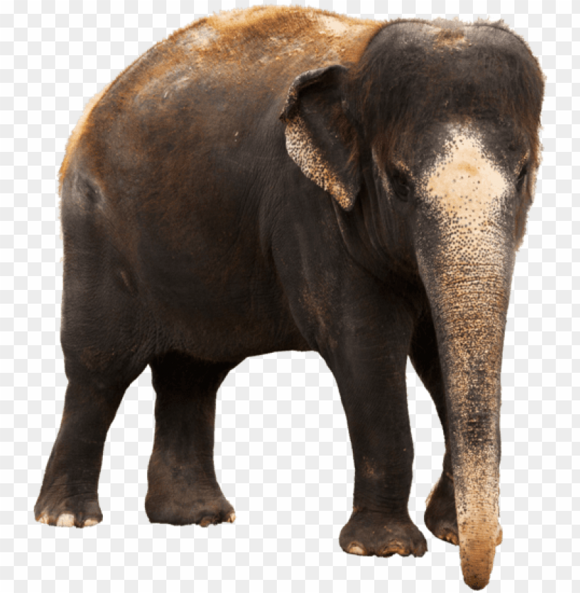 Indian Elephant Images Png Image With Transparent Background Toppng Search more hd transparent elephant image on kindpng. indian elephant images png image with