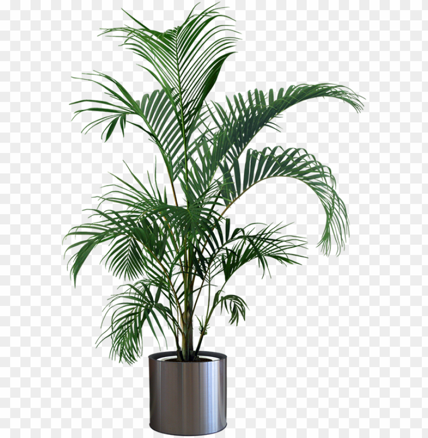 free PNG indoor plants png - plant in pot PNG image with transparent background PNG images transparent