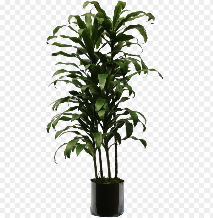 free PNG indoor plants png - transparent indoor plant PNG image with transparent background PNG images transparent