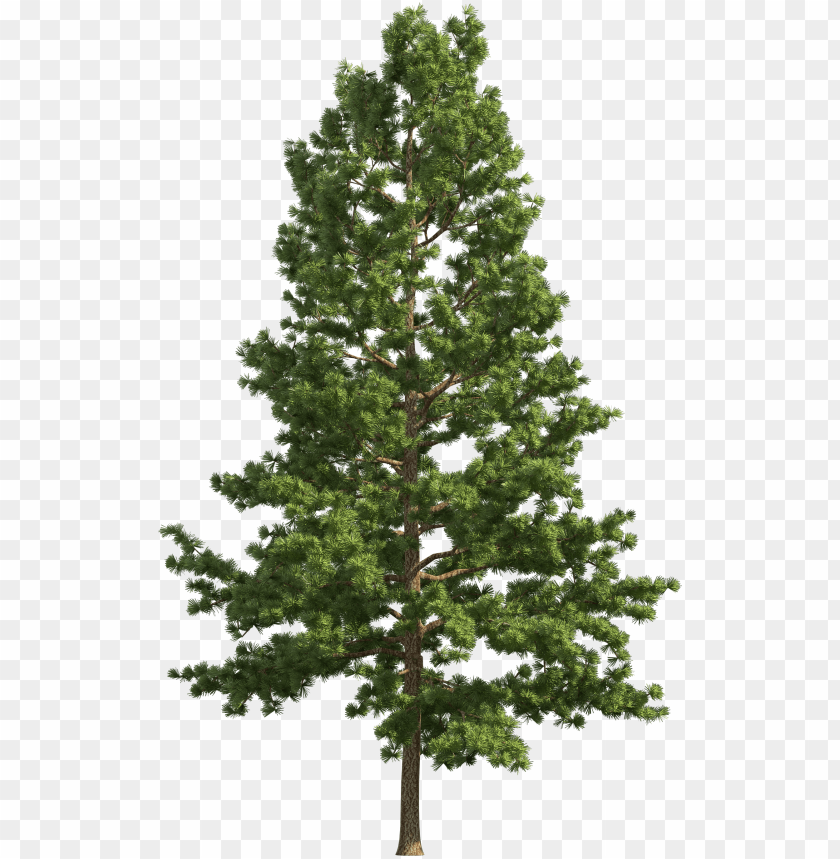 Ine Realistic Tree Png Clip Art Pine Tree Png Free Png Image With Transparent Background Toppng