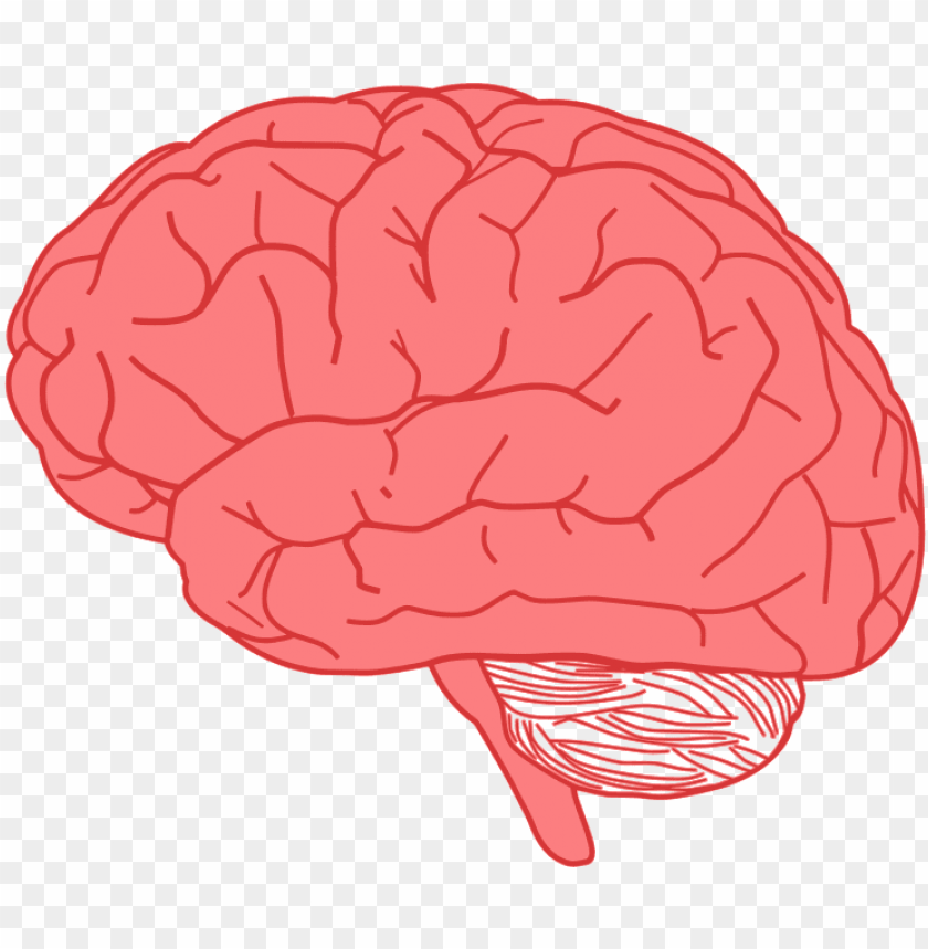 free PNG ink brain - brain clipart PNG image with transparent background PNG images transparent