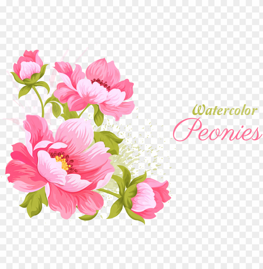 free PNG ink flowers wedding invitation watercolor painting - watercolor peonies vector PNG image with transparent background PNG images transparent