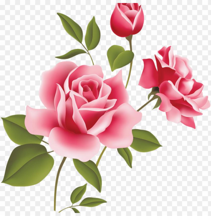 free PNG ink rose clipart pink rose art picture clipart clipart - rose flowers vector PNG image with transparent background PNG images transparent