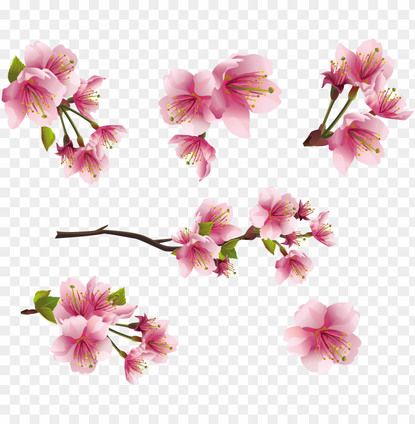 free PNG ink spring branch elements png clipart picture - sakura blossom - japanese cherry tree mu PNG image with transparent background PNG images transparent