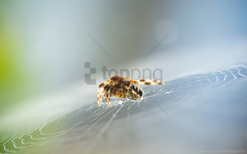 free PNG insect, spider, web wallpaper background best stock photos PNG images transparent